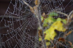 Water Web by Clangston