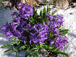 April in New England by Mogrianne