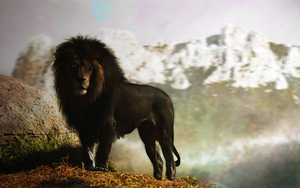 Black Lion by PAulie-SVK