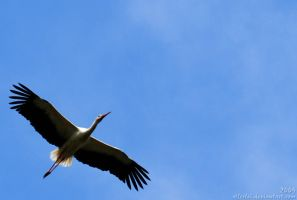 Stork: I believe I can fly... by Allerlei