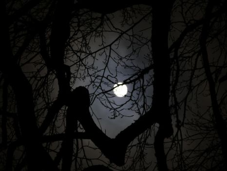 Moon In The Forest by DarkestPhotographer