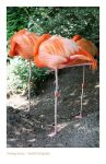 Flamingo Graces by webworm