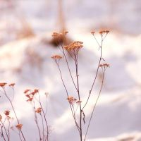 Winter 2012 - 3 by Eufrosis