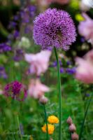 Garden Impressions by OliverBPhotography