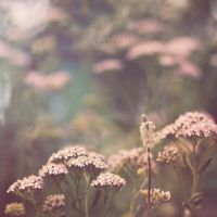 Fragile by odpium