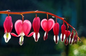 be still, my bleeding heart by teetotally