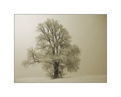 Tree in the snow by Hartmut-Lerch