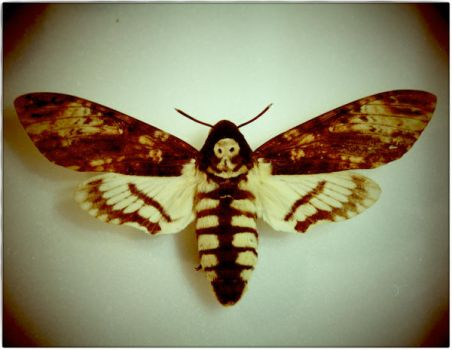 the death of a moth summary A quick summary of parashat acharei mot  weekly torah reading parashat acharei mot (after the death) click on the links to display the scriptures: (torah table.