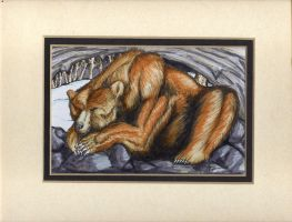 Hibernating bear by alexvontolmacsy