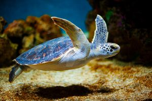 Animals-Water-0062-Sea Turtle by Pale-Recluse
