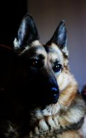 my lovely dog by Julees2610