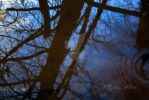 Rippled Reflections by DarkRoseImagery