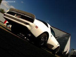 Trans Am II by AmericanMuscle