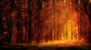 Red Forest by Aeflus