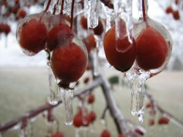 ice storm by kissel71
