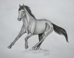 Running free by Salvada