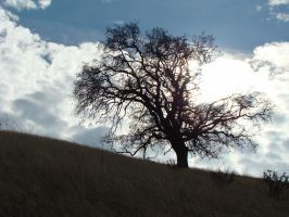 Silhouetted Tree by Travis-Person