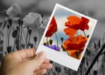 Flower Polaroid by ErenLakeman