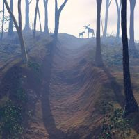 Forest Trail by curious3d