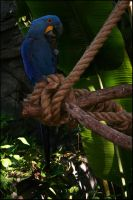 Blue Birdy by Project-27