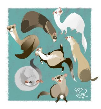 I Love Ferrets by IriusAbellatrix