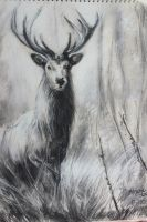 Majestic Stag by BekkiDavies