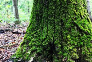 Moss on a tree by LLJPhotography