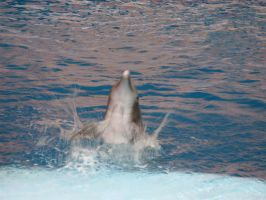 Dolphin Happy Dance by Eternal-Afterglow