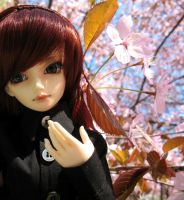 Minya with cherry trees by Minnake
