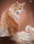 Maine Coon by Kelkis