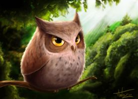 OWL by Anto-Z