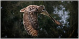 Eagle Owl by CoupeKid