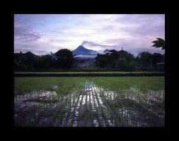 Merapi -landscape- by latebraking