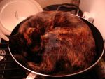 Stir-Fry Pussy:Ginger by TreLore