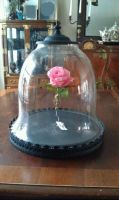 Rose and Bell Jar- Beauty and the Beast props by lilmoongodess