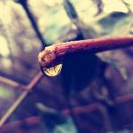 When it's raining by Pamba