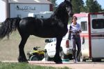 Friesian Stock 4 by Thunderbolt-Designs