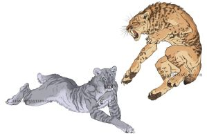Anthro sabertoothed cat sketches by Atan