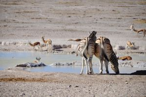Watering hole by Caatherinee
