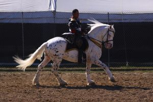 Cantering 15 by SoloPianoStock