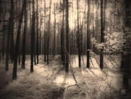 Forest 1938 by FilipR8