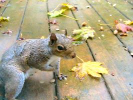 Squirrel on my deck! by Foxiwan