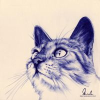 Ballpoint Pen Kitty by kleinmeli