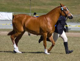STOCK - Gold Coast Show 120 by fillyrox