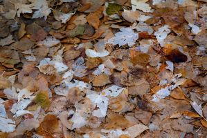 Leaves of yesterday by themobius
