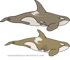 Antarctic (Cappuccino) Orca Adopt: Iiduh by WeisseEdelweiss