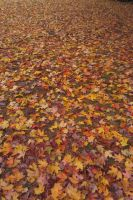 Sea of Leaves by jkund