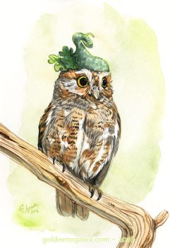 Strange Elf Owl by GoldeenHerself