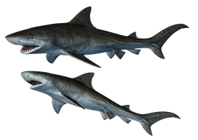 Sharks-1 PNG Stock by Roys-Art