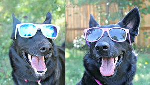 The Dog With The Shades by WinterMountainKennel